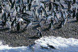 Argentinien Reise  Pinguine in Punta Tombo, am Atlantik
